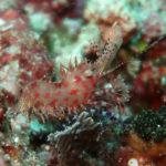 Bunaken Underwater