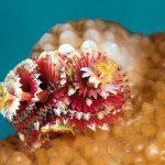 Bunaken Siladen - Under Water